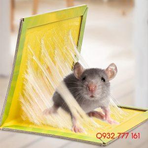 dịch vụ diệt chuột tại đà nẵng