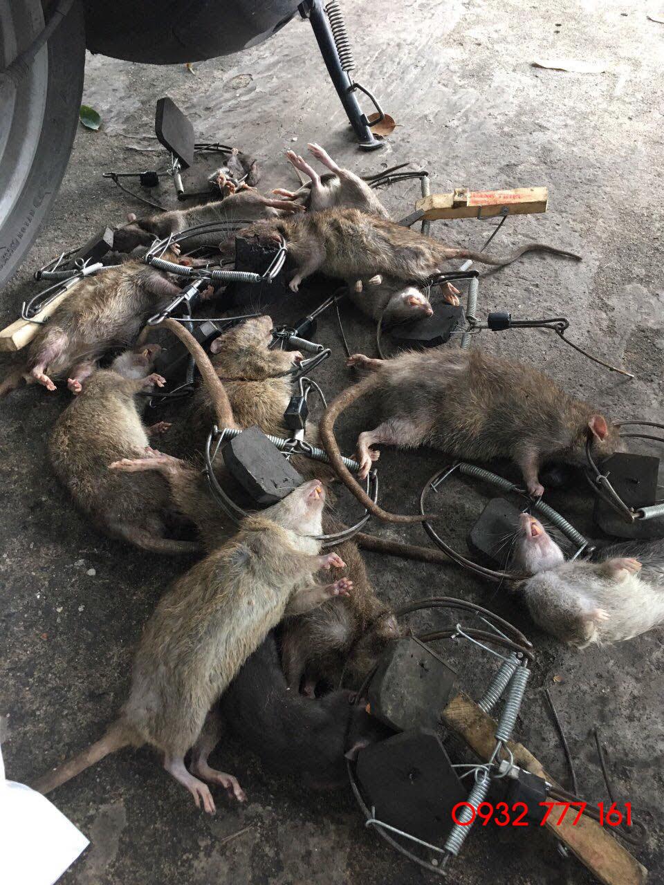 diệt chuột đà nẵng