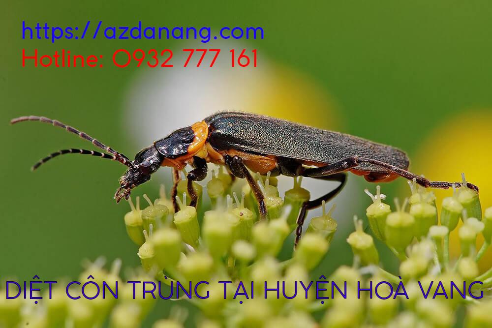 diệt côn trùng tại huyện hoà vang
