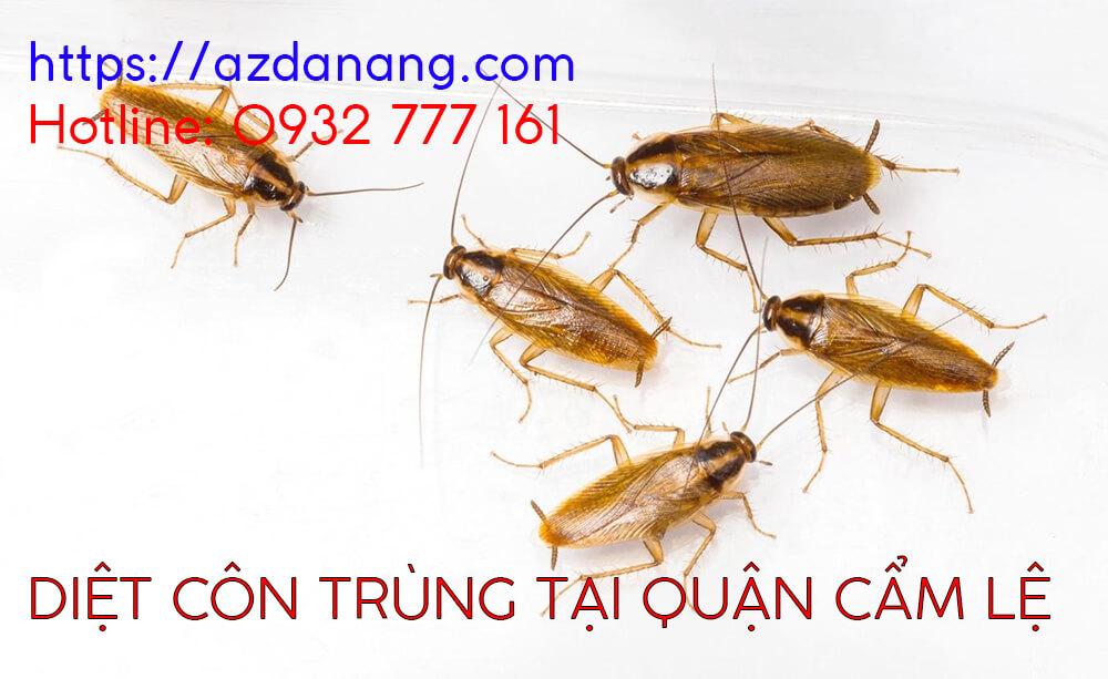 diệt côn trùng tại quận cẩm lệ