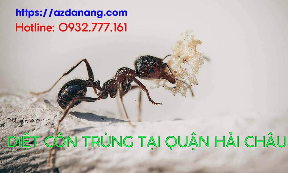 diệt côn trùng tại quận hải châu