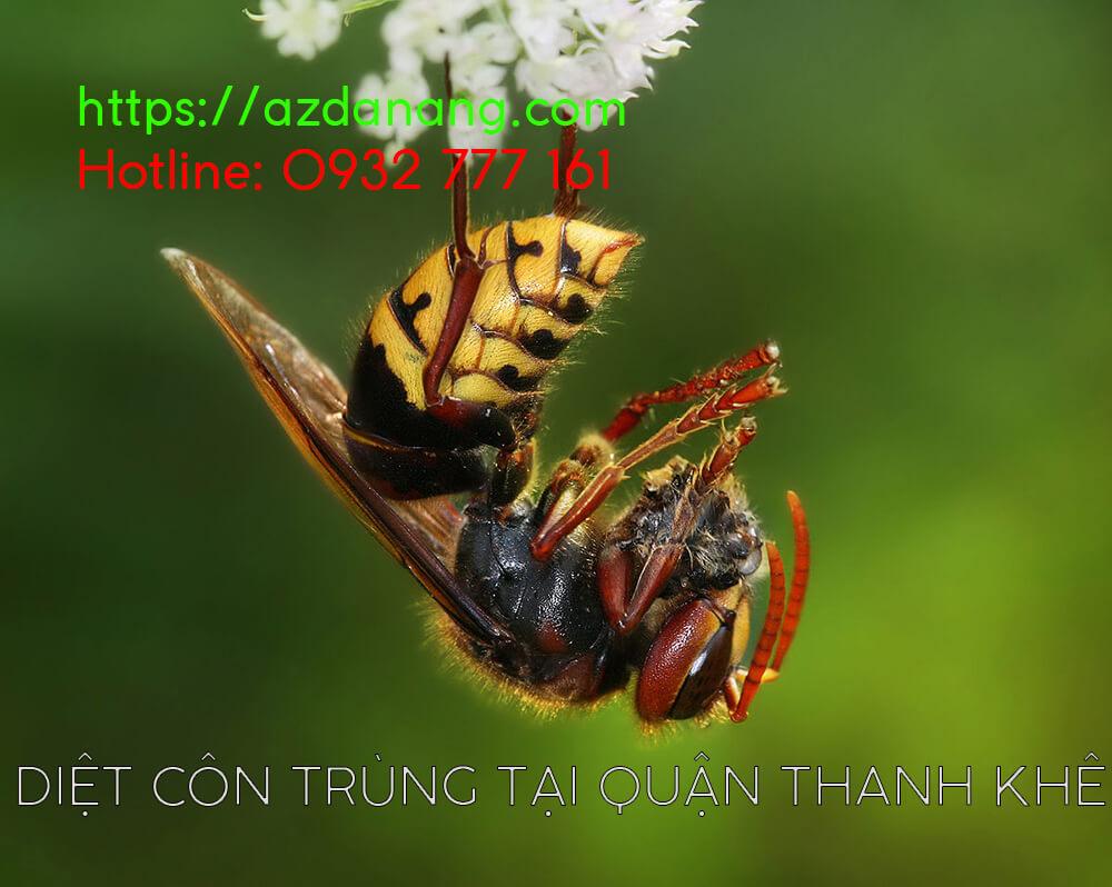 diệt côn trùng tại quận thanh khê